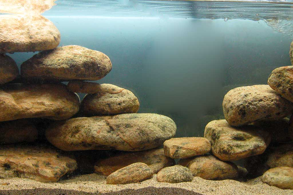 acquario tanganica