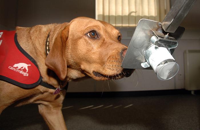 un animale domestico può rilevare il cancro alla prostata