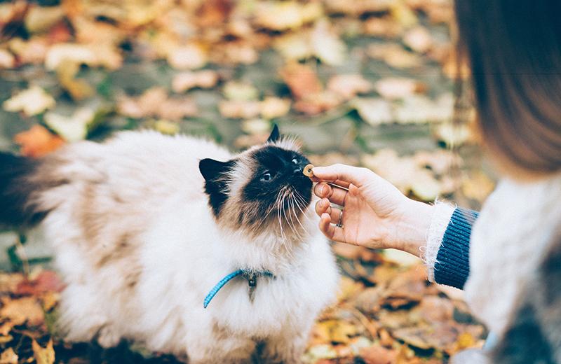 Come Scegliere Il Miglior Cibo Per Il Mio Gatto Sterilizzato Zampotta
